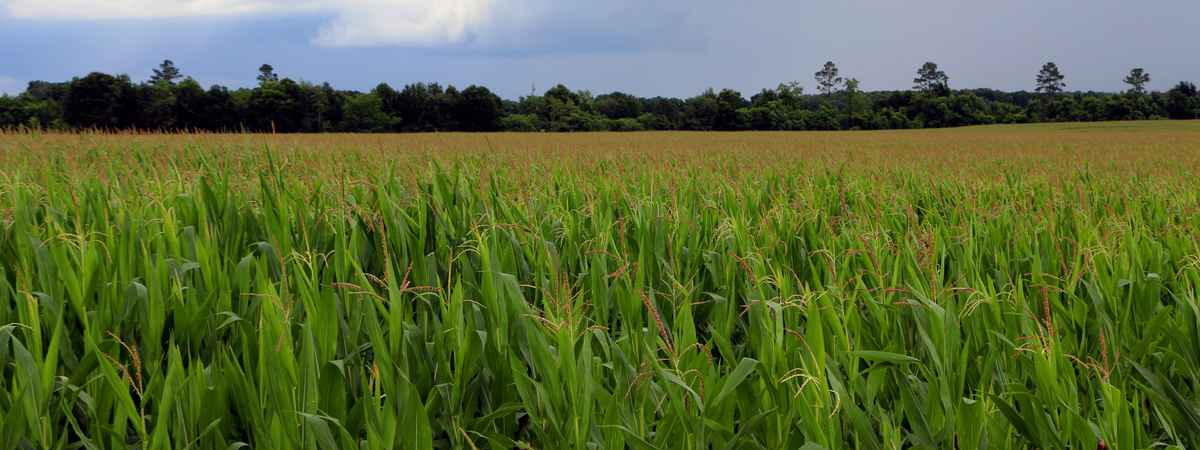The Southern Agrarian blog